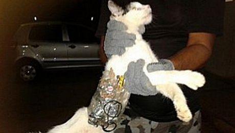 Συνελήφθη... γάτα που μετέφερε πριόνι σε φυλακή