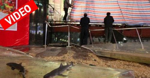 Η στιγμή που σπάει ενυδρείο γεμάτο καρχαρίες