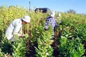 Λάρισα : Αγρότες στο στόχαστρο του ΣΔΟΕ