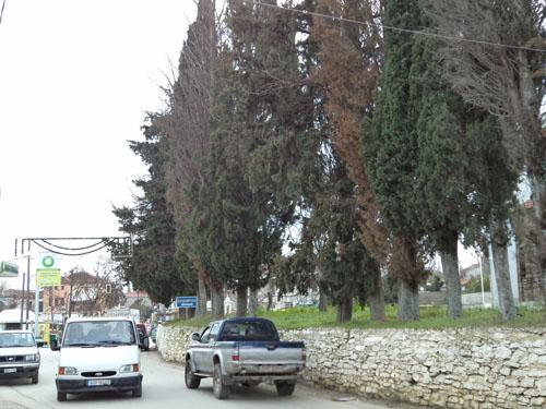 Ασφαλιστικά μέτρα για την κοπή 24 δέντρων στην Αργαλαστή