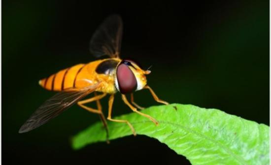 Εντομα, οι κατάσκοποι του μέλλοντος