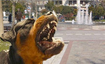Δύο θύματα αδέσποτων σκύλων