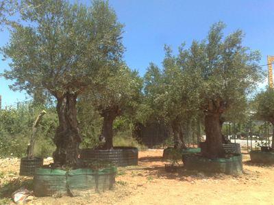 Κρήτη: Δικηγόρος έχασε τη ζωή του κάνοντας αγροτικές εργασίες