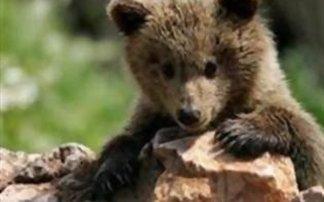 Καστοριά: Νεκρό αρκουδάκι ενός έτους σε τροχαίο