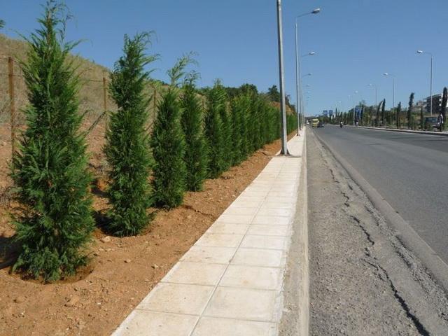 Δενδροφυτεύσεις ξεκίνησαν στο Δήμο Ρήγα Φεραίου