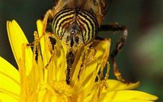 Τα φυτά και οι μέλισσες επικοινωνούν μέσω ηλεκτρικών σημάτων