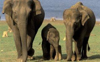 Μαζική σφαγή ελεφάντων καταγγέλλει η WWF
