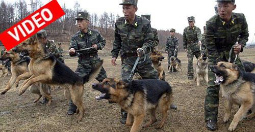 Η περίεργη εκπαίδευση των σκυλιών του στρατού στη Β. Κορέα