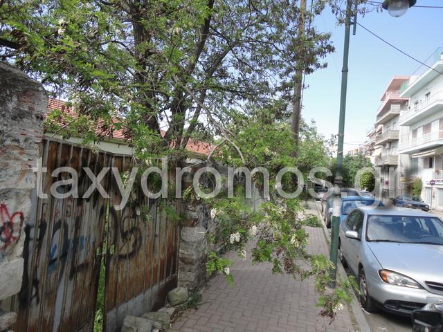 Επικίνδυνο κλαδί  δέντρου