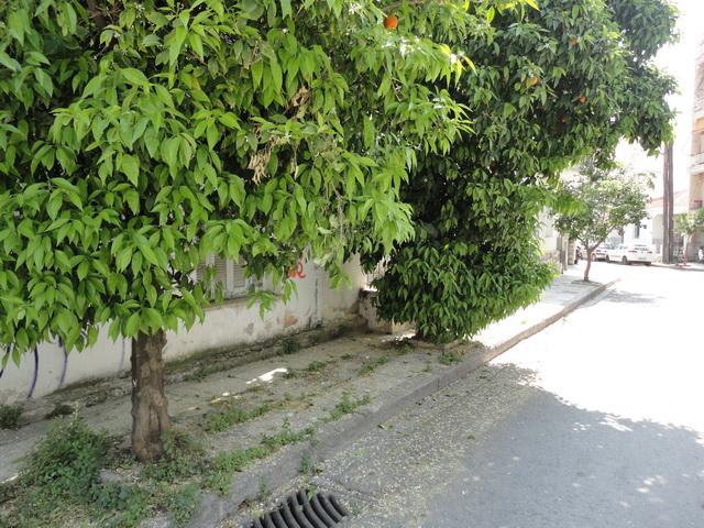 Δέντρα κλείνουν το πεζοδρόμιο