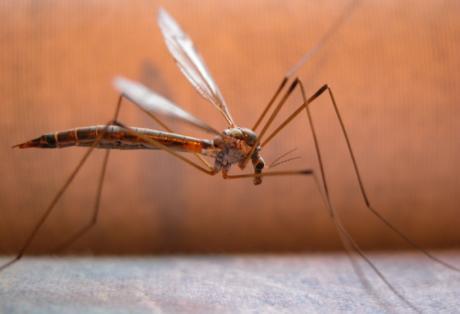 Καταπολέμηση των κουνουπιών