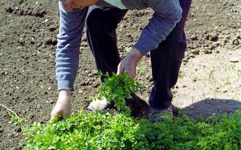 Συνταξιούχος νεκρός από κατανάλωση άγριων χόρτων