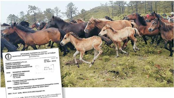 Τα (παρ)άλογα του Κάμπου...