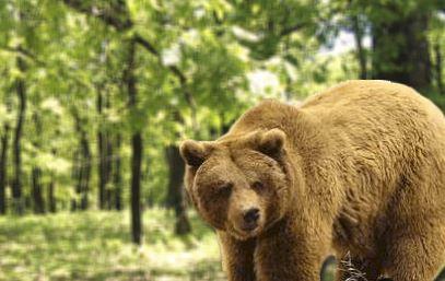 Συνάντησε… την αρκούδα στη Συκή!