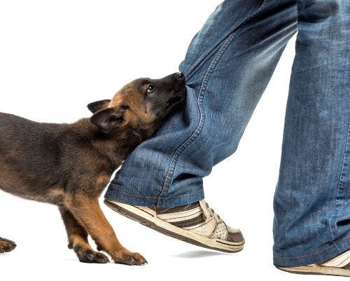 Αυξάνονται οι επιθέσεις αδέσποτων σκύλων