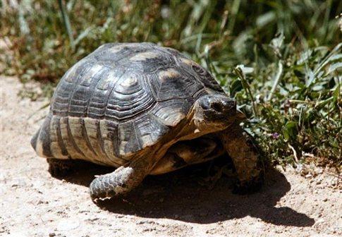 Με φορτίο ...107 χελώνες συνελήφθησαν δύο οδηγοί στο λιμάνι της Ηγουμενίτσας