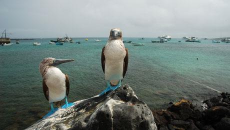 10 προστατευόμενα νησιώτικα και μη, οικοσυστήματα!