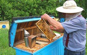 Εγκρίθηκαν τα προγράμματα μελισσοκομίας 2014 - 2016