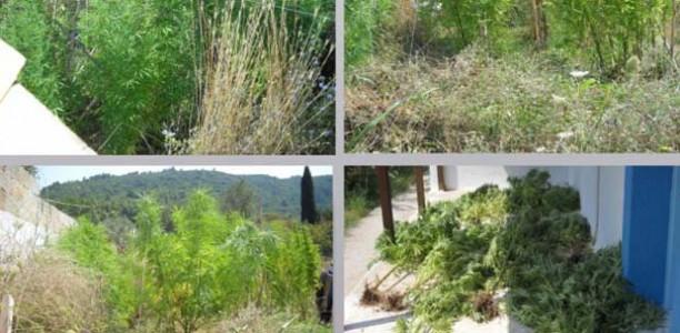 Καίριο χτύπημα κατά των ναρκωτικών στη Σκόπελο