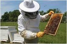 Εκπαιδεύσεις μελισσοκόμων Μαγνησίας