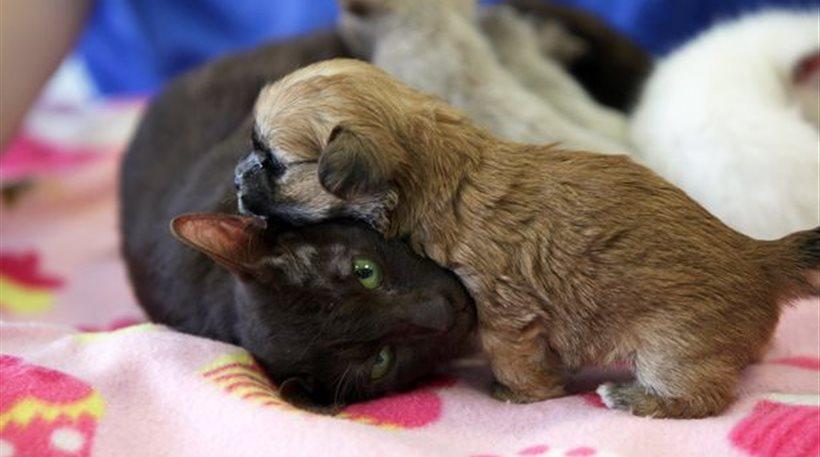 Γάτα «υιοθέτησε» ορφανό κουταβάκι στη Βρετανία