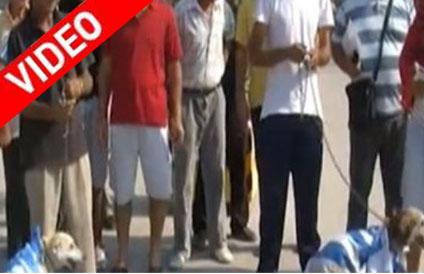 Αλβανία: Έντυσαν σκυλιά με την ελληνική σημαία και τα περιέφεραν