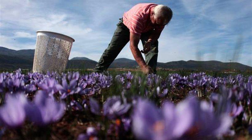 Παράταση καταβολής της ειδικής ασφαλιστικής εισφοράς από αγρότες