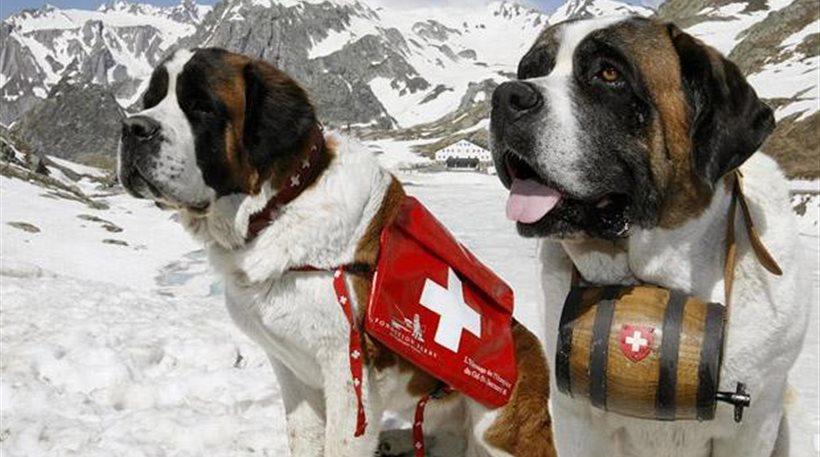Ελβετός γερουσιαστής πρότεινε τους επίσημους να υποδέχονται σκύλοι ή χορευτές