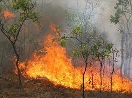 Φωτιά  χθες στο Νεοχώρι