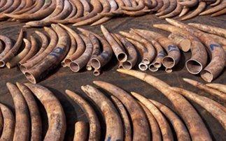 Οι ΗΠΑ καταστρέφουν έξι τόνους ελεφαντόδοντο
