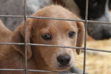 Σάλος στη Ρουμανία από το νόμο που θανατώνει αδέσποτα ζώα