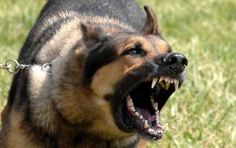 Λάρισα: Στο νοσοκομείο 8χρονος από επίθεση σκύλου