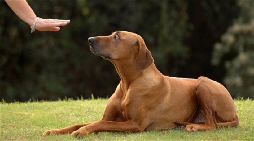 Τρίκαλα: Ο σκύλος μύρισε το χασίς και τα δενδρύλλια