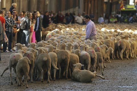 Κατέβασαν τα πρόβατα στο κέντρο της πρωτεύουσας