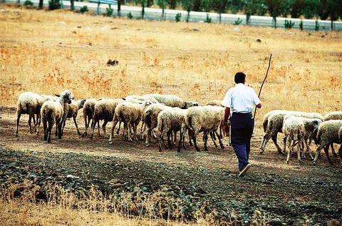 Την Τρίτη οι αποζημιώσεις σε 65.000 κτηνοτρόφους