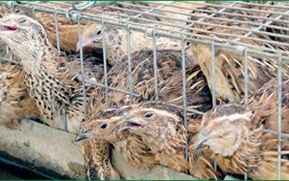 Αστυνομικοί έλεγχοι σε παράνομο παζάρι ζώων