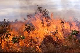 Μεγάλη φωτιά στο Αχλαδοχώρι Τρικάλων