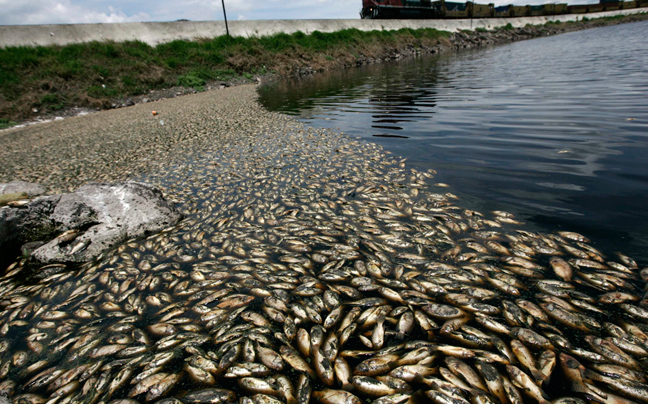 Νεκρά ψάρια σε ποταμό των Τρικάλων