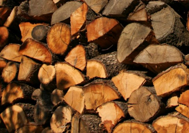 Καυσόξυλα από ξερά δένδρα Θα προσφέρει η Εν Δράσει