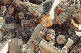 Αρχισε η κοπή καυσόξυλων στο Δήμο Ρήγα Φεραίου
