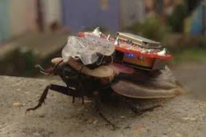 Τηλεχειριστήριο για κατσαρίδες εξοικειώνει τα παιδιά με την κακοποίηση ζώων