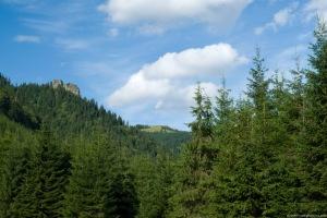 WWF: στο μάτι νομοθετικού κυκλώνα παράκτιες και δασικές περιοχές