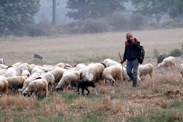 Βρέθηκε σώος ο κτηνοτρόφος που είχε χαθεί