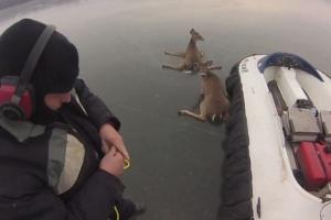 Διάσωση ελαφιών από παγωμένη λίμνη με χόβερκραφτ
