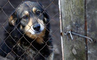 Σκυλιά που δεν τα ήθελε κανείς θα γίνουν «βοηθοί» σε εναλλακτικές θεραπείες
