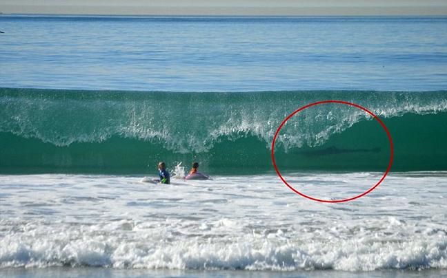 Photo- bomb από έναν... λευκό καρχαρία