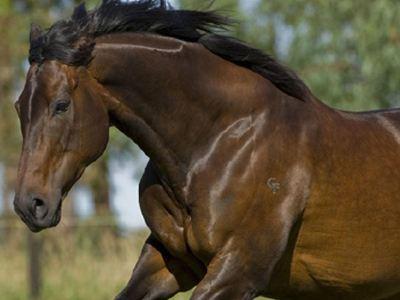 Σε περιπέτειες ομογενής επιχειρηματίας μετά από τον ξαφνικό θάνατο αλόγου του