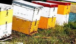 Τρίκαλα: Έκλεψαν μελίσσι μαζί με τις μέλισσες