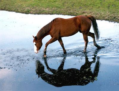 Πυροβόλησαν και σκότωσαν άλογο στο Γριζάνο