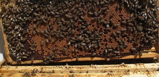 Λάρισα: Έκλεψαν 46 κυψέλες μελισσιών